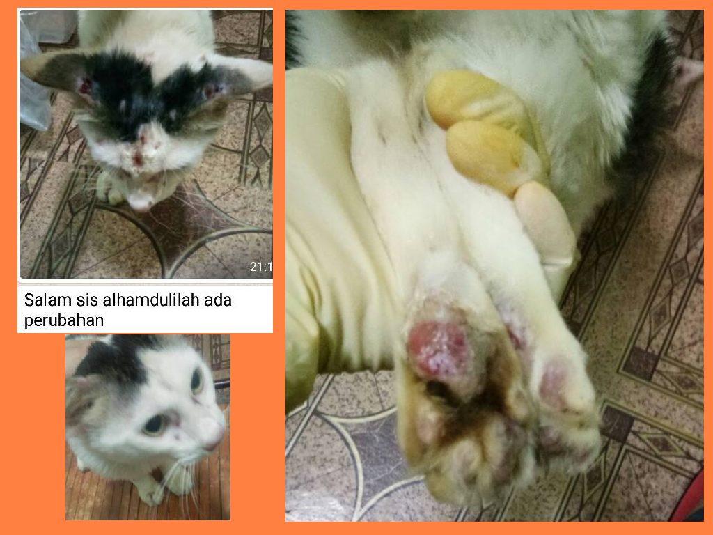 Kucing Sporo Beranak Pinak Ps Herbs Testimoni