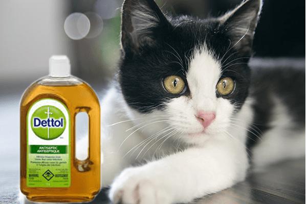 Kucing Dan Dettol Ps Herbs Penyakit