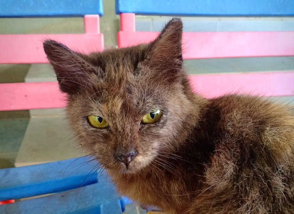 Panduan Merawat Kucing Kurap Scabies Psherbs Panduan